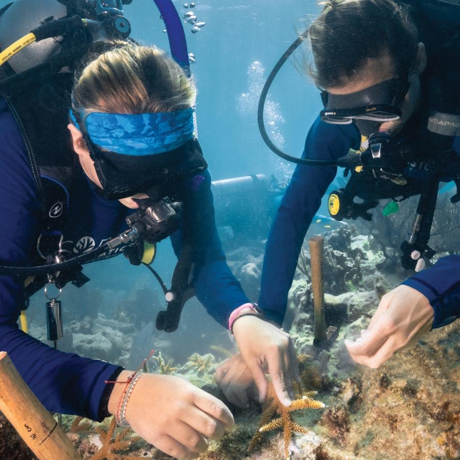 CoralRestoration